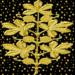 золото на черном 506.png
