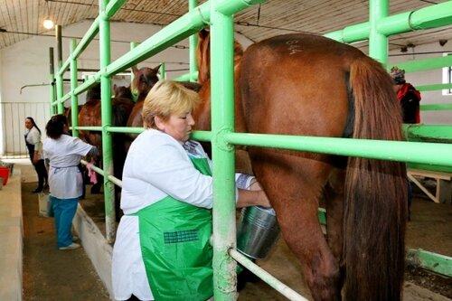 Фото как доят лошадь