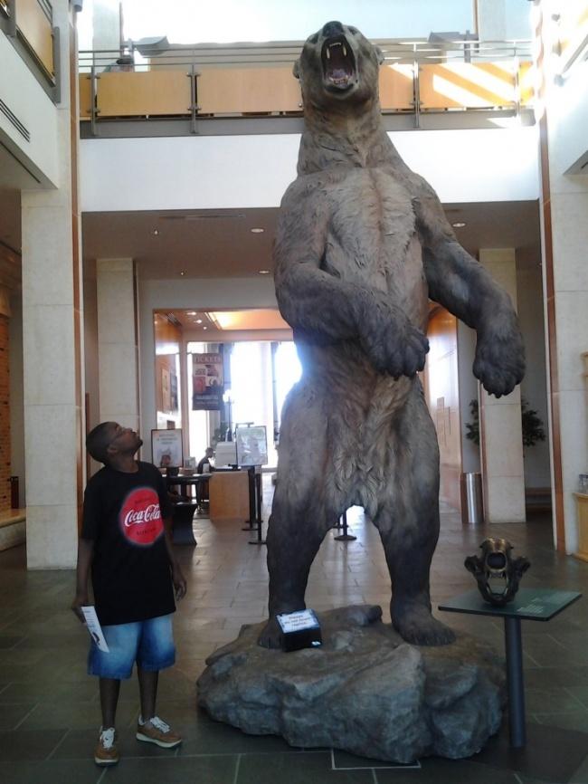 © imgur  Гигантский короткомордый медведь (медведь-бульдог), выпрямившись, достигал высоты 3,5