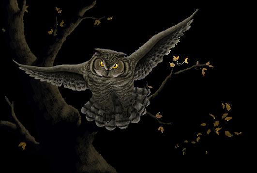 Lia_F_04_Owl_hurtube.png