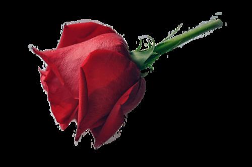 роза, png