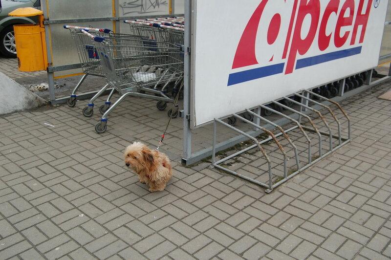 собачка перед магазином