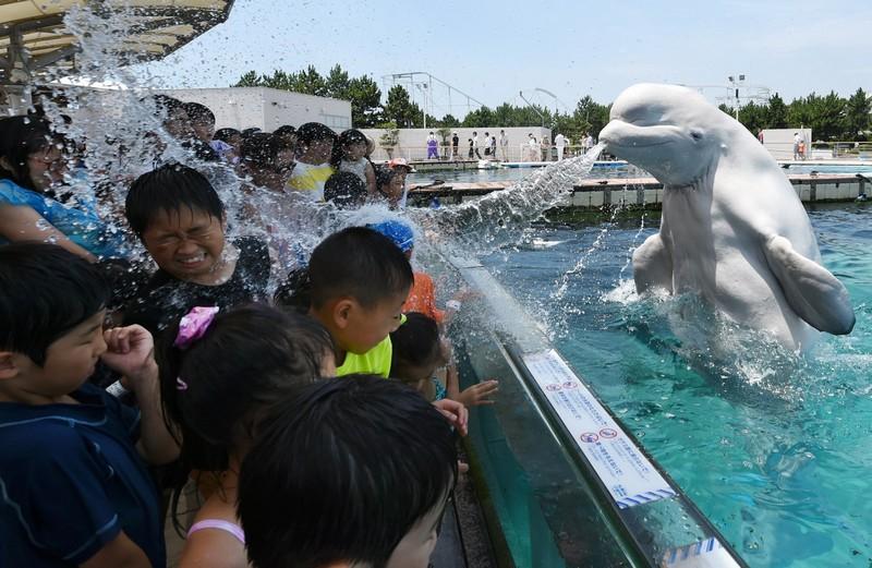 JAPAN-ANIMAL-WEATHER-SUMMER-HEAT
