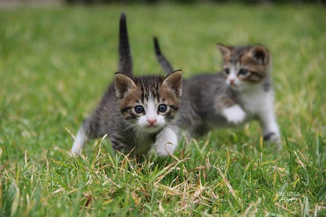если кошка катается по земле