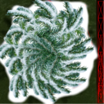 snowy_pine_tree.png