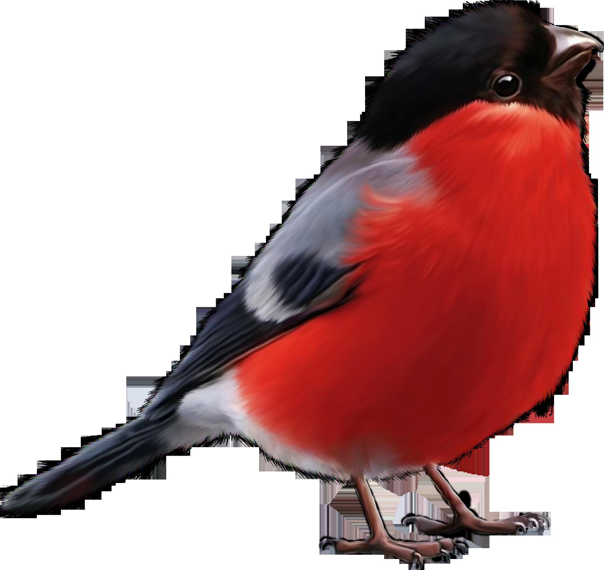Сколько лет живет птичка воробей