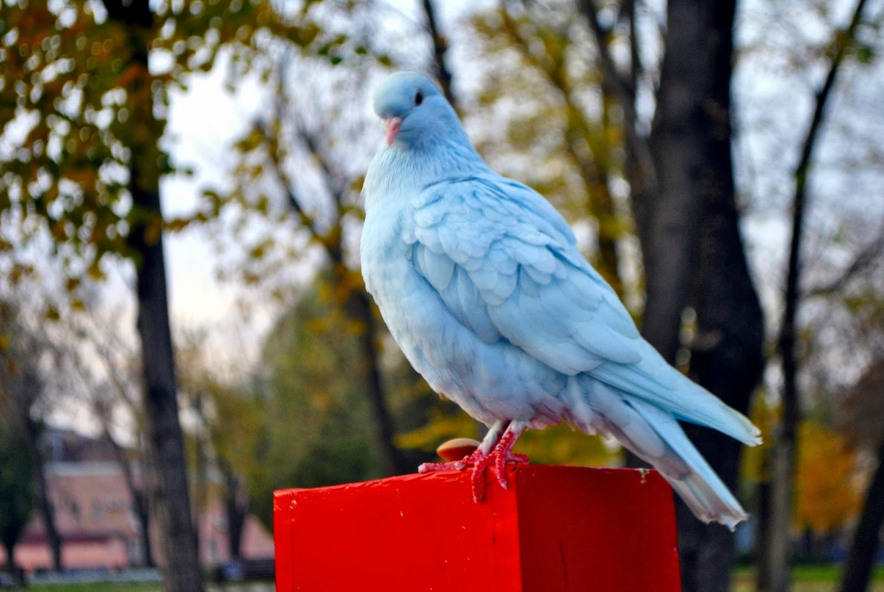 Maroosya birds