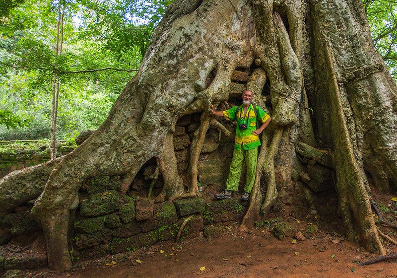 У дерева