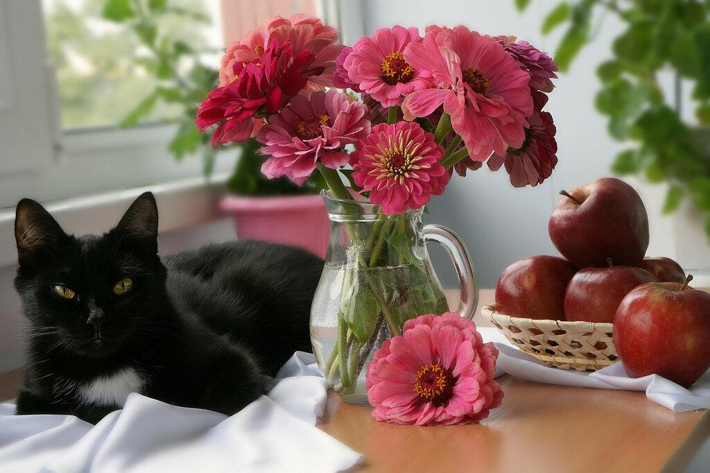 Натюрморты с кошками!