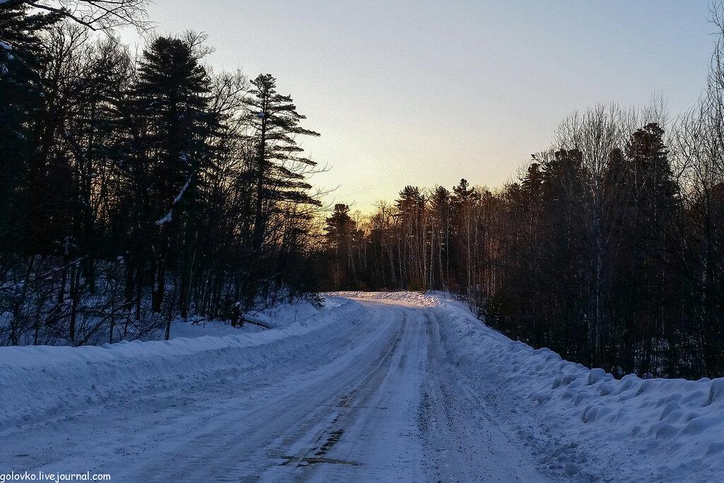 Хвойный лес как на Рублевке