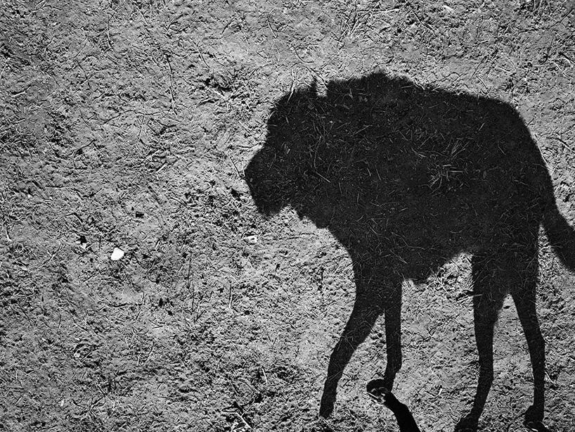 Mondo cane, Thomas Roma.jpg