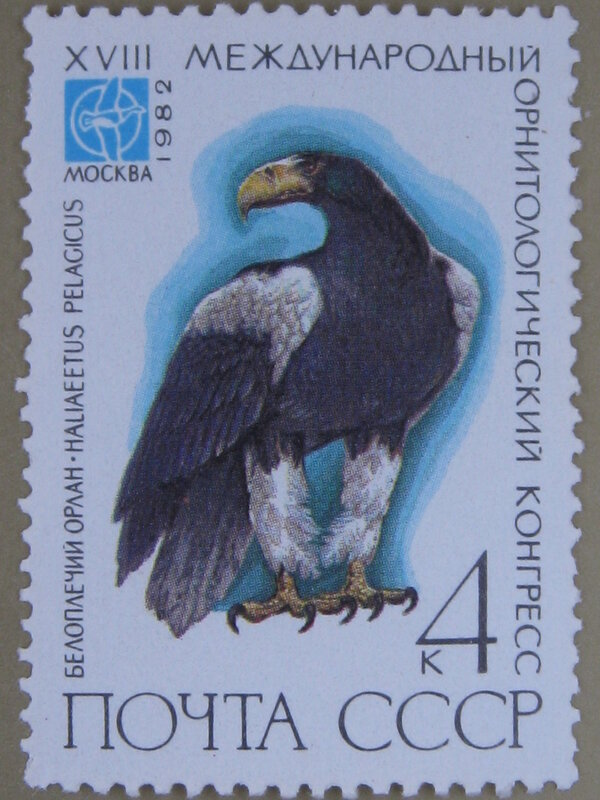 Белоплечий орлан (Haliaeetus pelagicus).