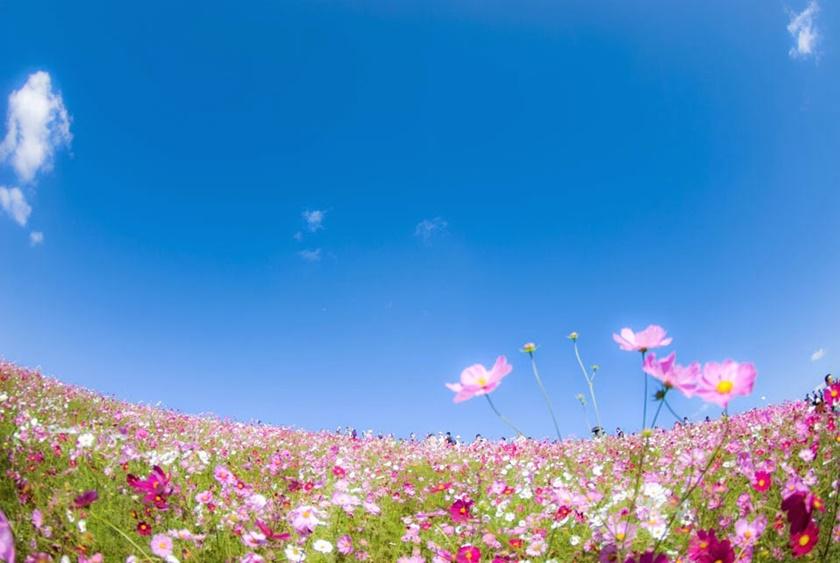 Живописный японский парк Хитати Кайхин 0 1422e3 48764867 orig