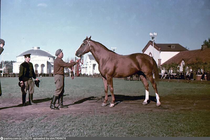 ВСХВ. Выводной круг. 1954 1955.кони.2..jpg