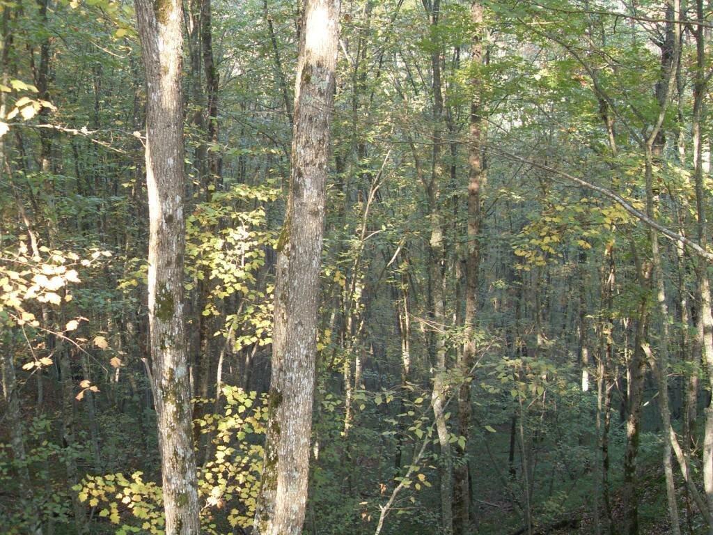 12 октября 2008, под Горячим Ключом, лес (102).JPG