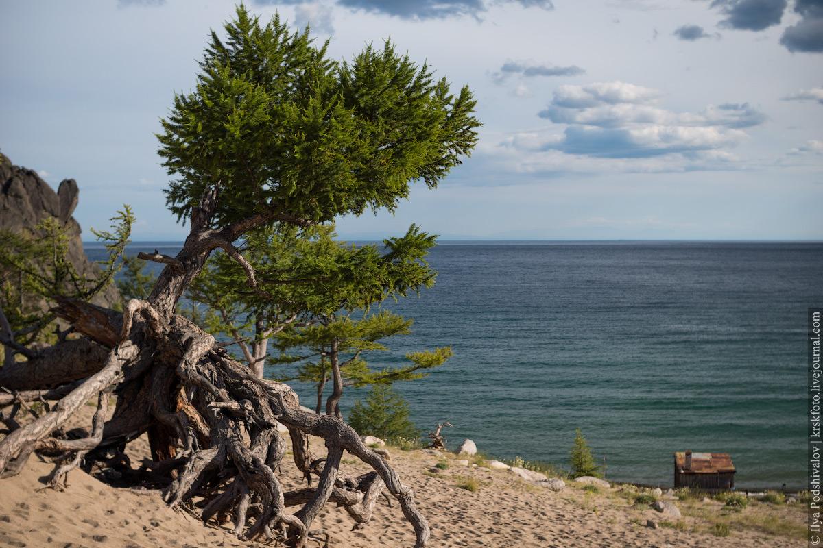 дерево на байкале картинки клиентов пишут