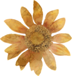 pbp_DBDesigns_OM_AlteredSilkFlower.png