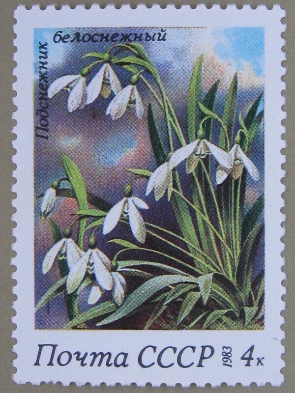 Подснежник белоснежный (Galanthus nivalis).