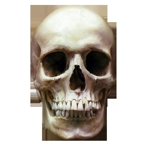 Клипарт PNG - Человеческие кости