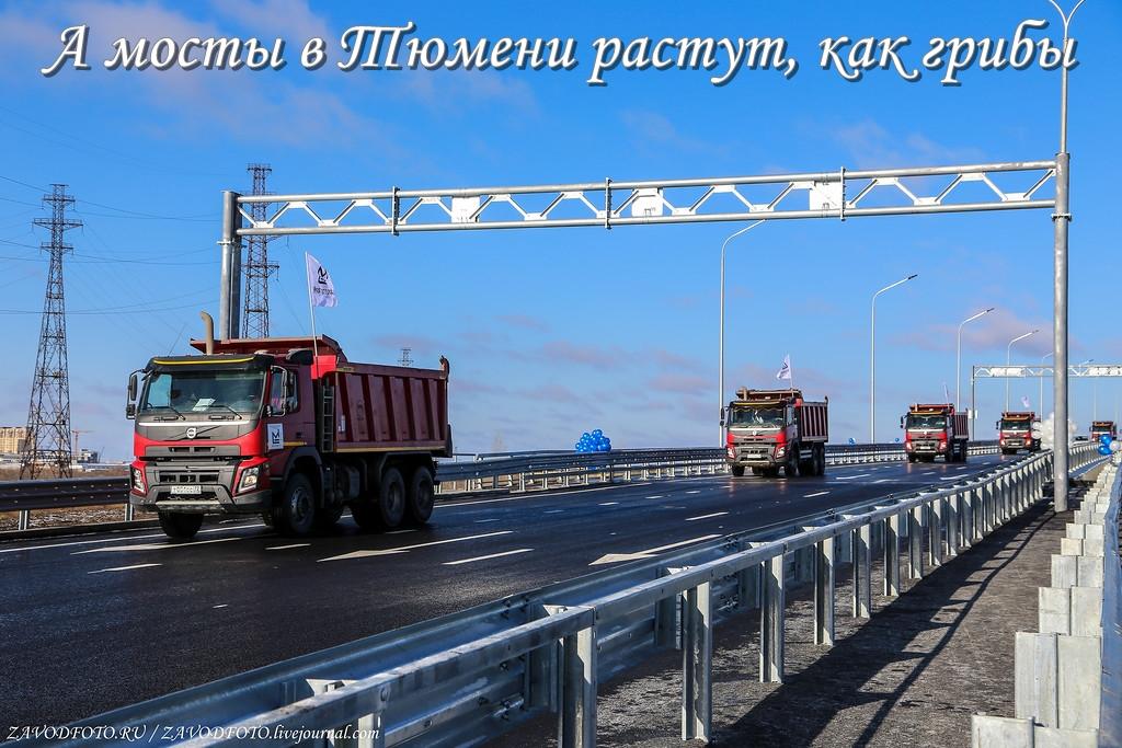 А мосты в Тюмени растут, как грибы.jpg