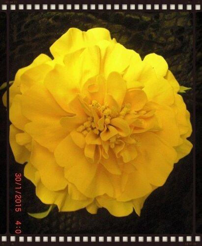 Цветы из фоамирана 0_fcd87_cb297379_L