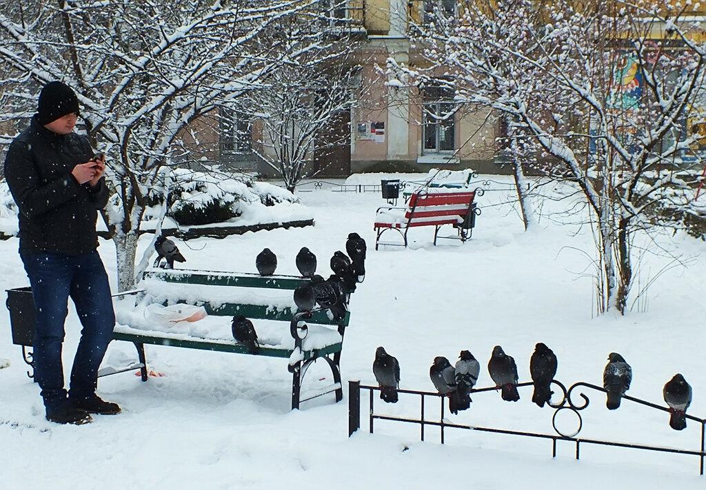 ... и голуби