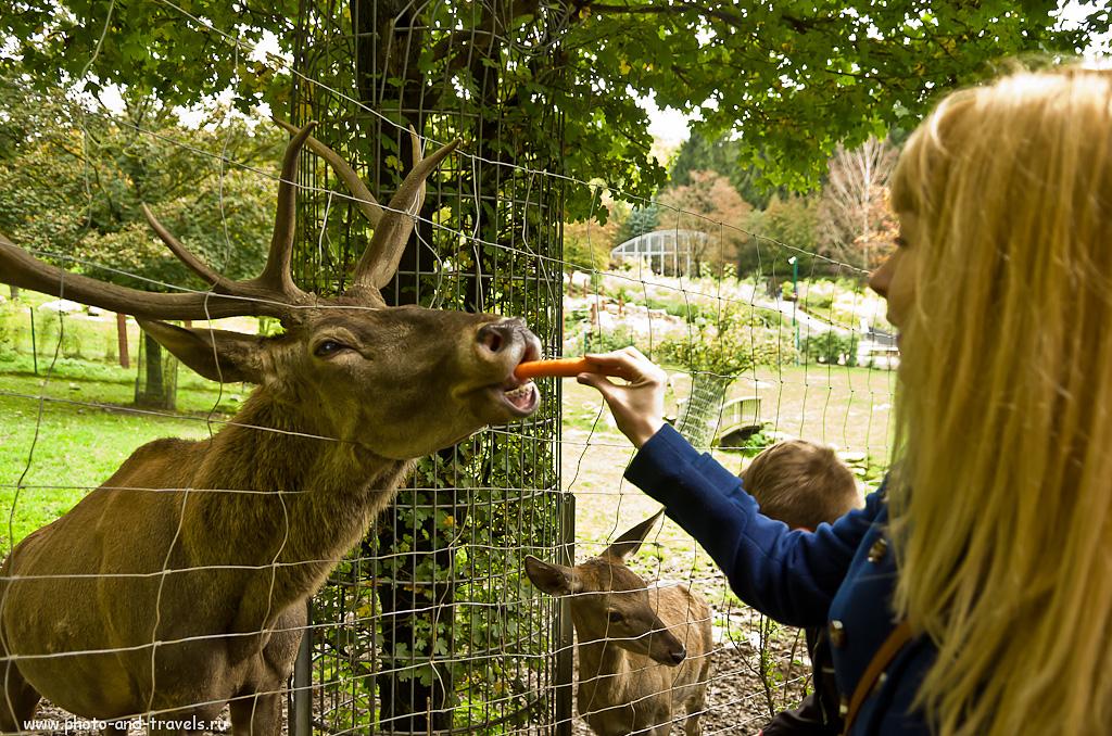 """7. Полжизни за морковь! Отзыв об экскурсии в зоопарк """"Опель"""", что рядом с Франкфуртом. Поездка по Германии на автомобиле."""