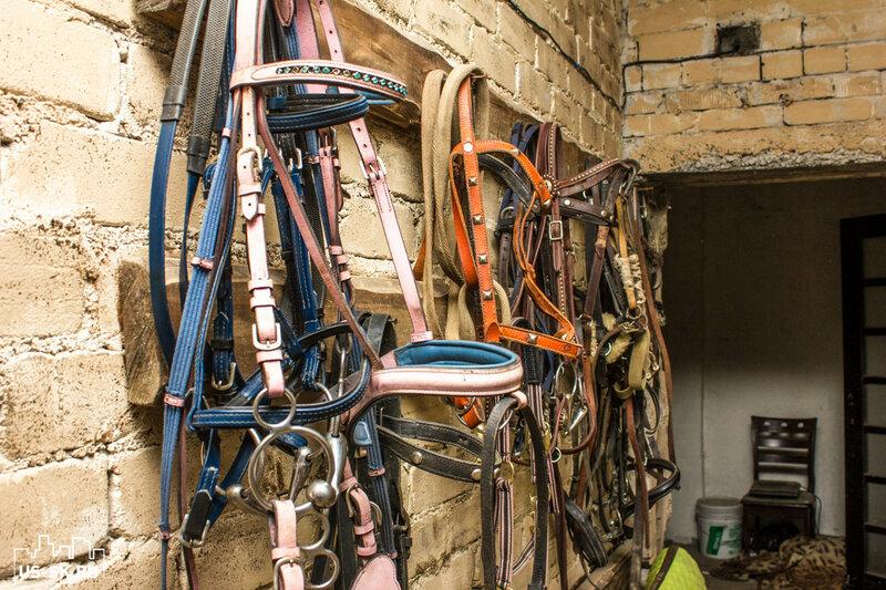 уздечи для лошади в конюшня в Уссурийске