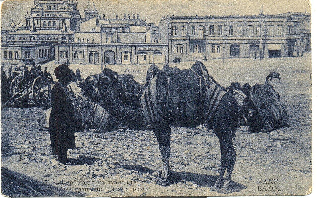 Верблюды на площади