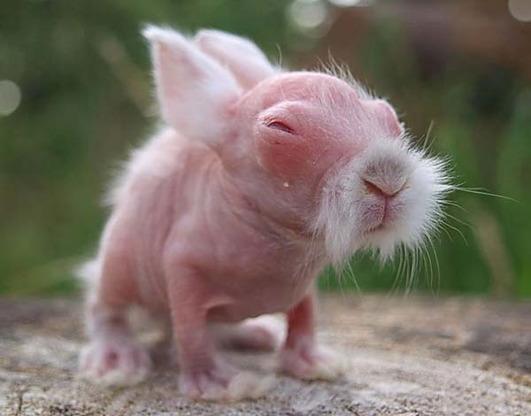 Baby Wombats look like Old Kung-Fu Masters.jpg