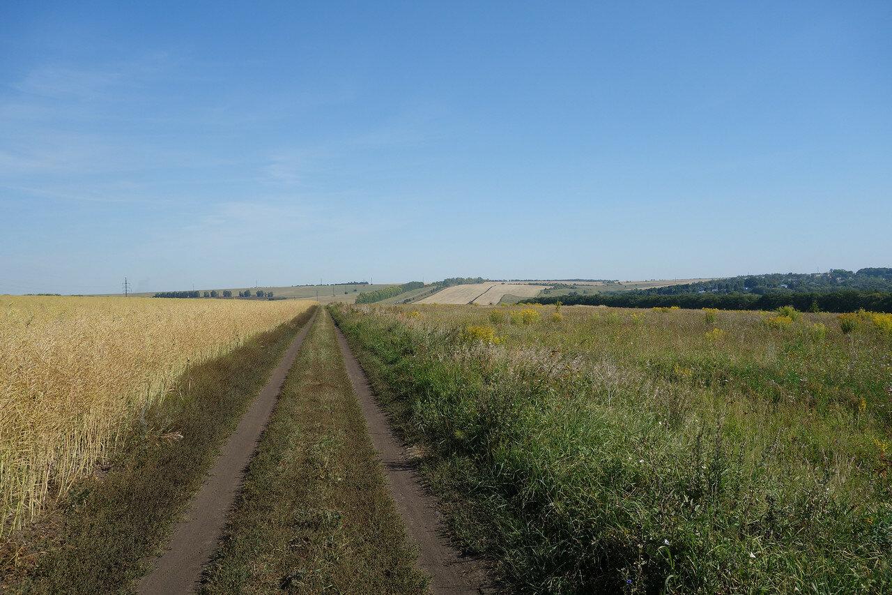 поля и перелески Щекинского уезда