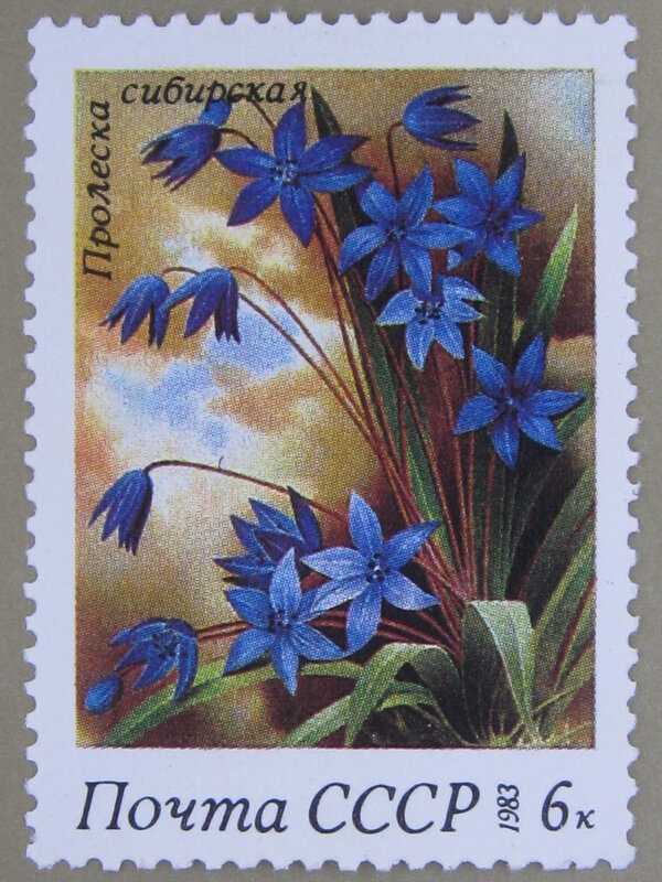 Пролеска сибирская (Gagea lutea).