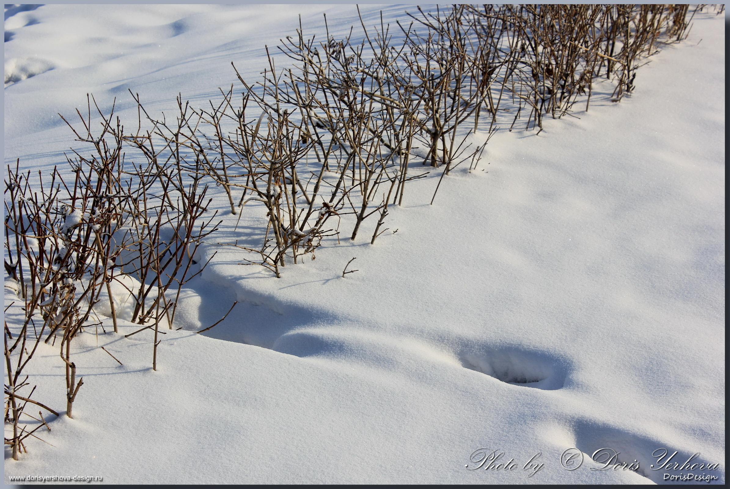Тени на снегу. Фото - Дорис Ершова