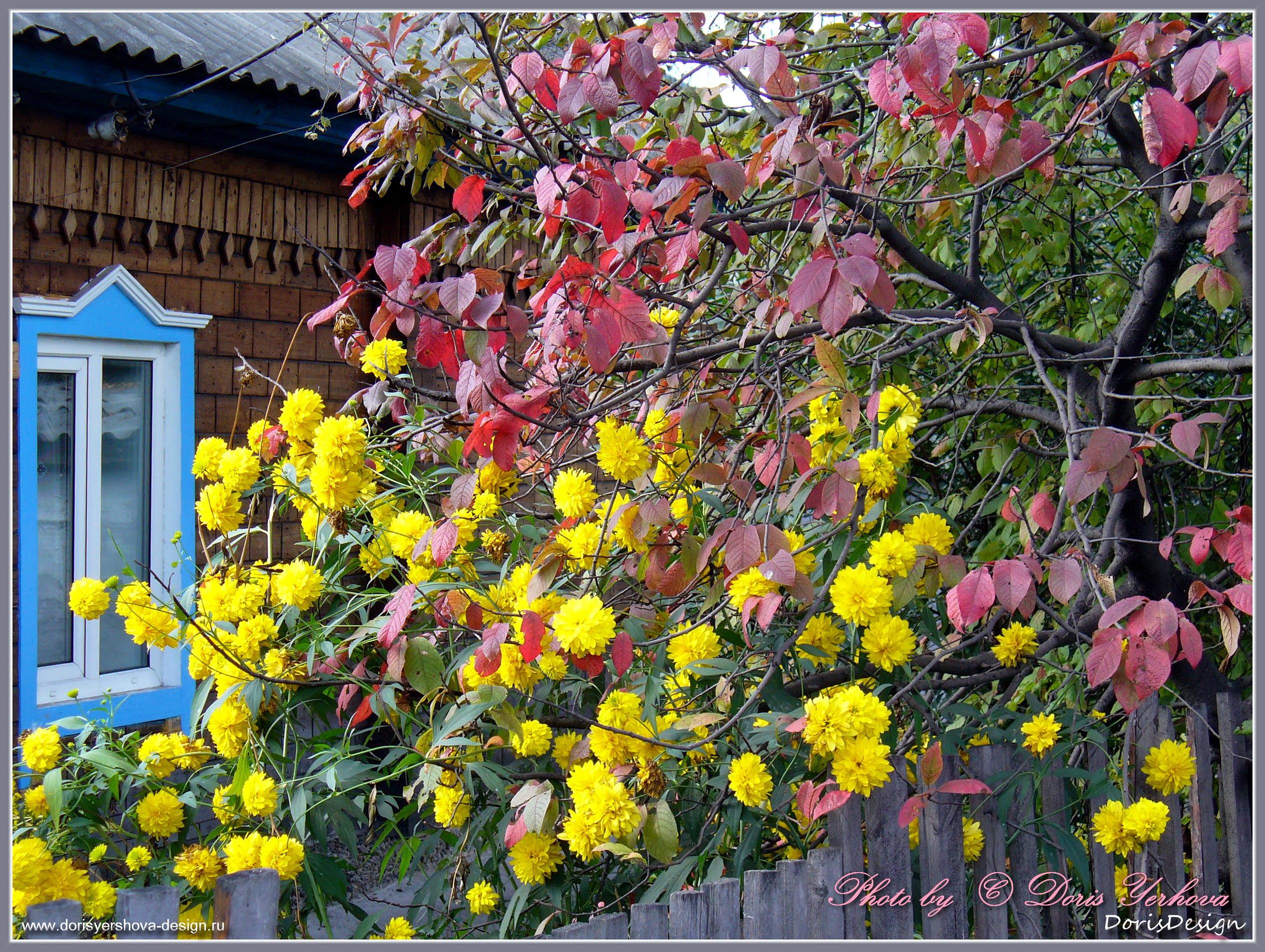 Осенние цветы и листья. Фото - Дорис Ершова