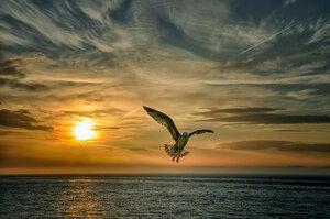 """Утренний полет (Из серии """"Никогда не учите птиц летать..."""")"""