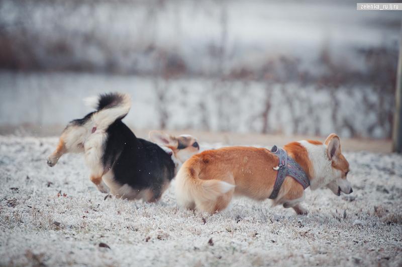пофотографирую Ваших собак! - Страница 5 0_169873_982cbb6e_orig