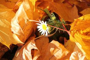Осень золотая_4. Осенняя природа_4.