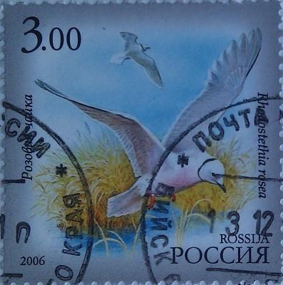 2006 фаунаЯкутии чайка 3