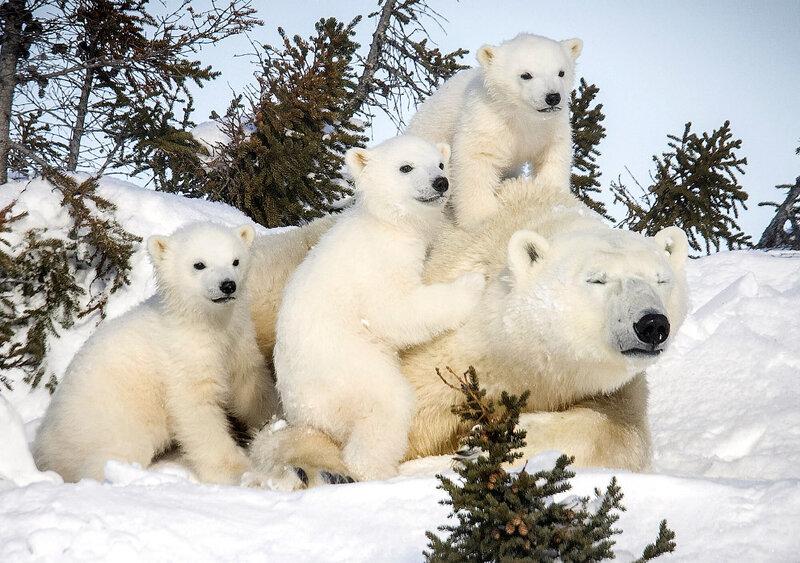 фото медведя в хорошем качестве