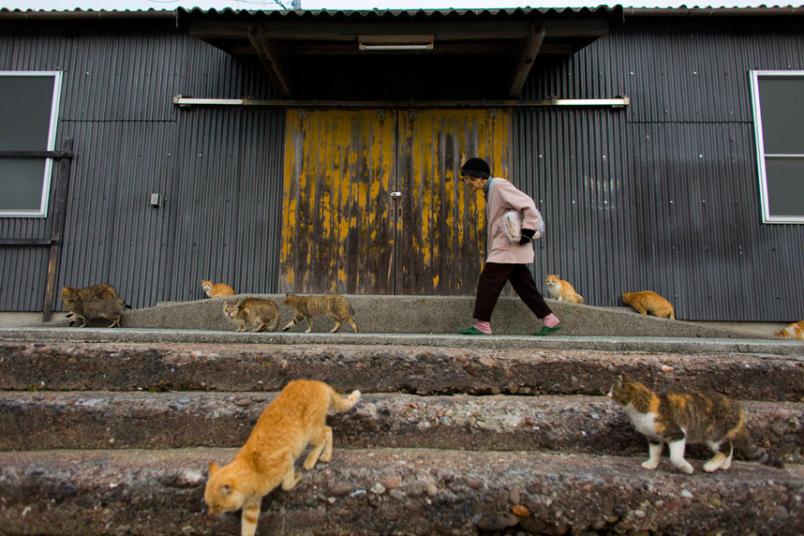 Империя кошек, Аошима остров, Южная Япония