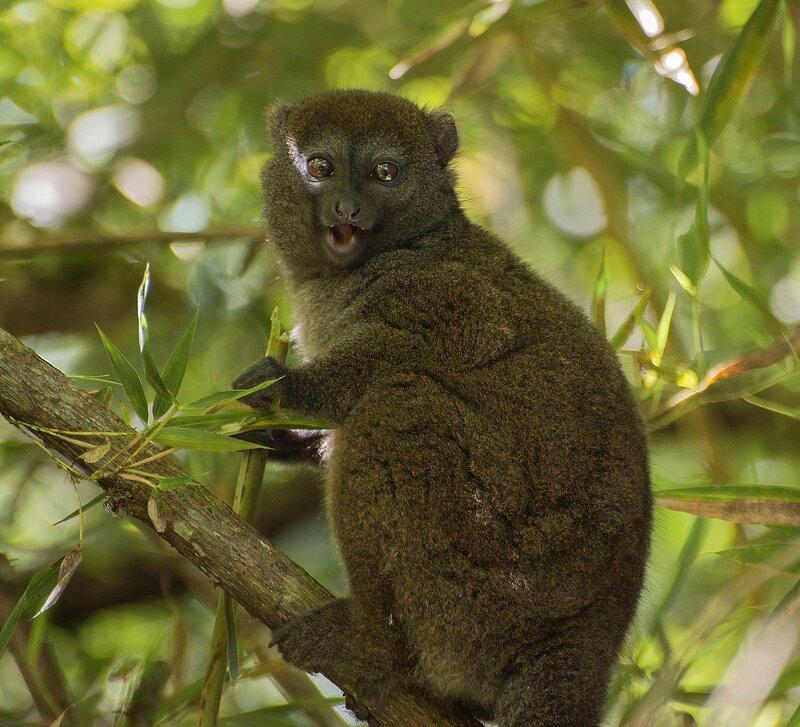 Мадагаскар, национальные парки и их чудесные обитатели. Сентябрь-октябрь 2014.