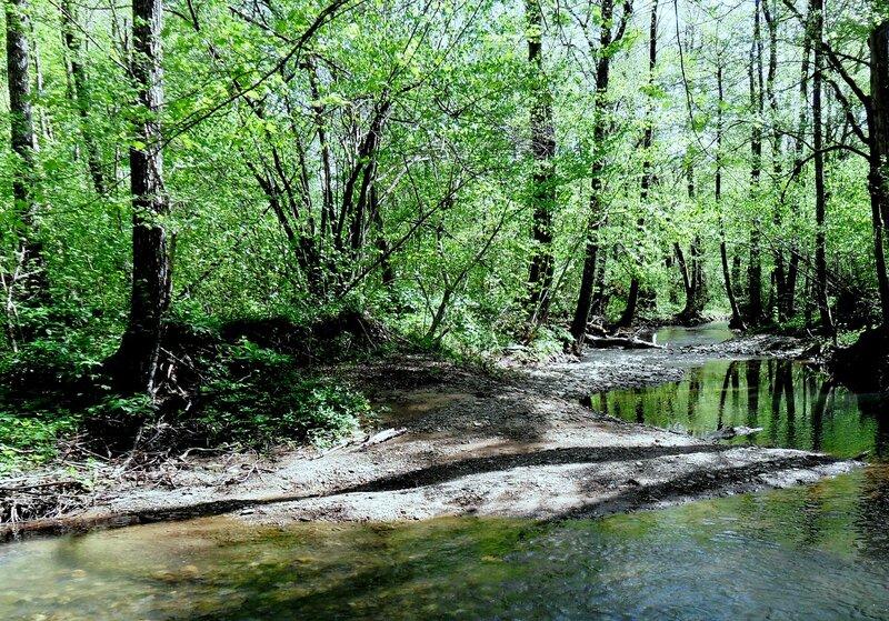 Лес на том берегу ... SAM_7698 - 2.JPG