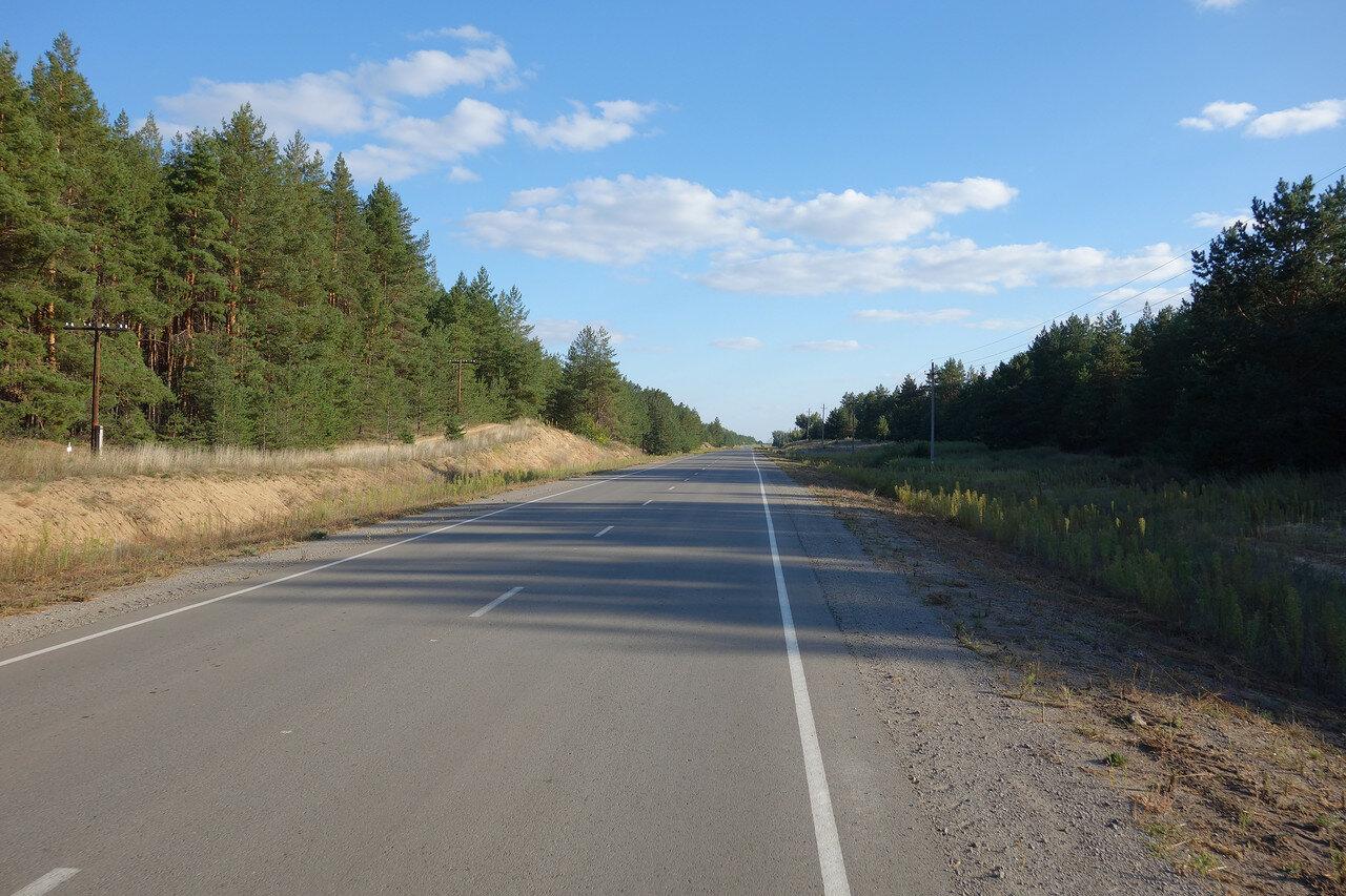 сосновые посадки у слободы Терновая