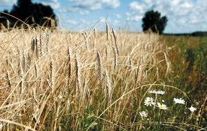Сельхозугодья Молдавии открыты для инвестиций из зарубежья