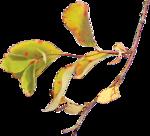 ldavi-drifting-leaftwig6.png