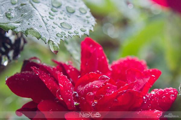 У природы нет плохой погоды, выпуск 10 | Очарование упавших капель.