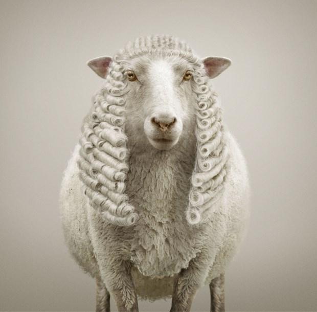 Прически для животных в рекламе Braun
