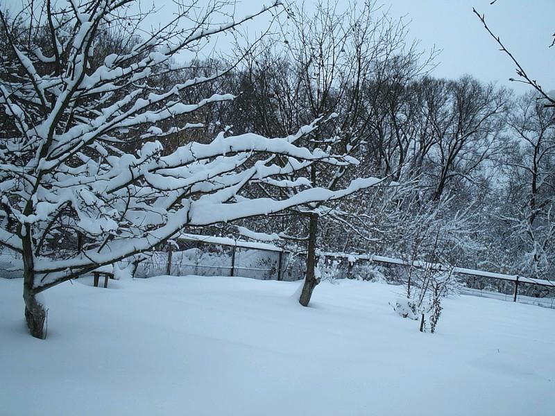 защита деревьев от мороза