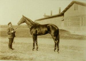 Участник скачек с гнедым жеребцом 3-х лет Дарго(завод Е.И. и М.И.Лазаревых)-победителем скачек на приз коннозаводчиков.