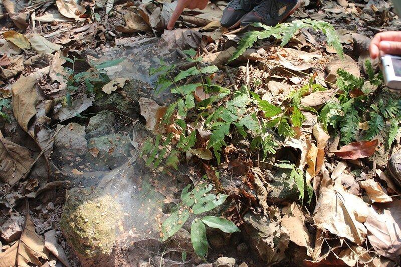 паутина вороноквого паука на траве в национальном парке Namtok Samlan